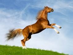 Праздник лошадей в Штирии
