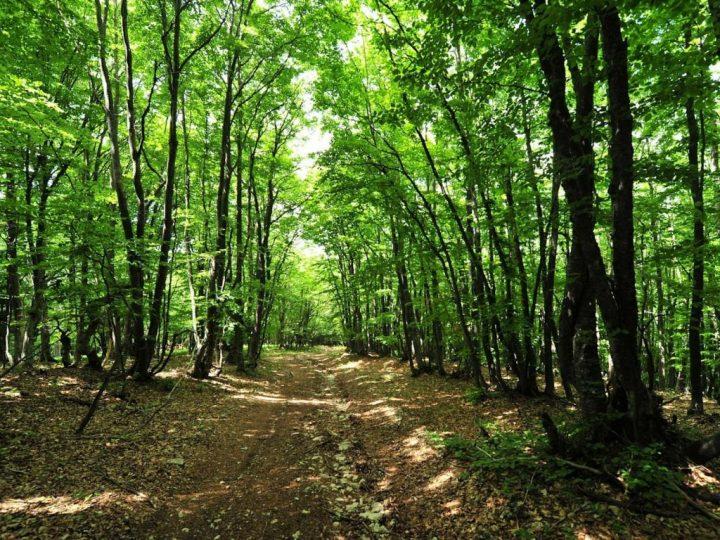 Крымские леса закрыты для посещений