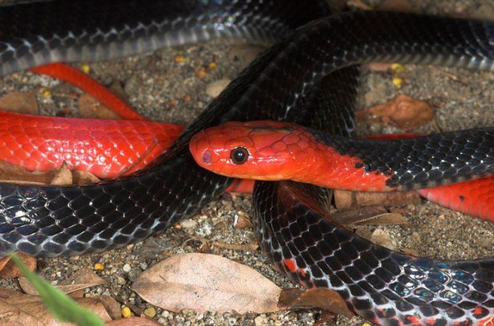 Первое в мире редкое змеиное потомство в Мосгорзоопарке