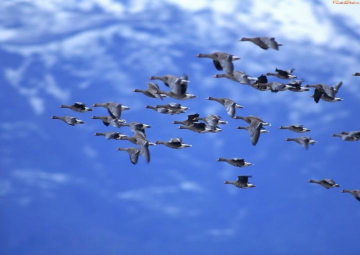 Открылся парк птиц в Златоусте