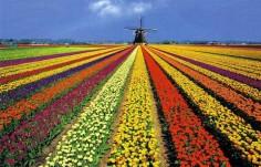 Упростилось получение Голландской визы