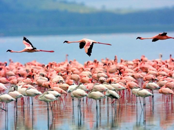 Интересные праздники в Кении