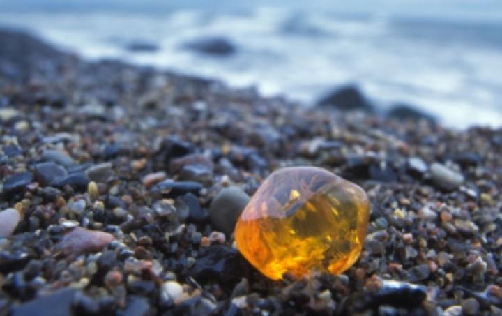 Пляж в Калининградской области засыпало янтарем