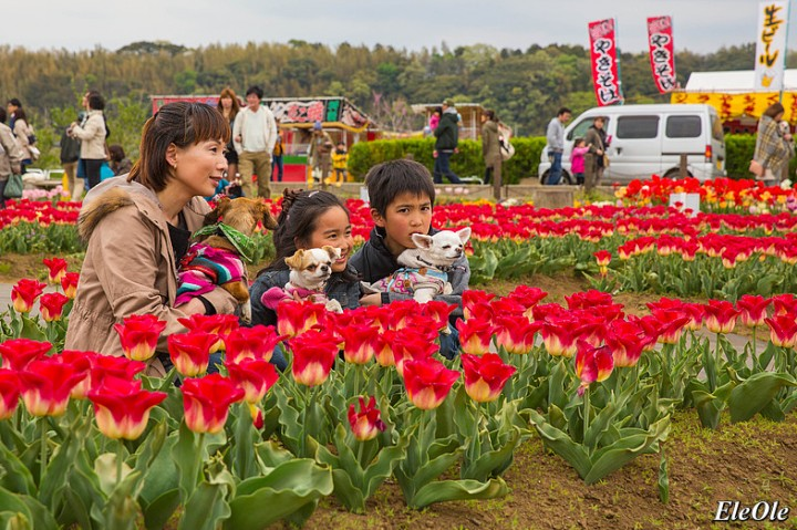 Фестиваль роз в Токио