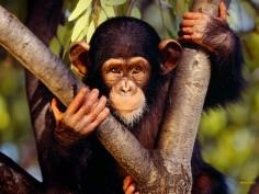 На таиландском курорте обезьяна сделала селфи
