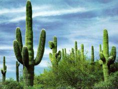 Мексика проводит эксперимент на новой туристической программе