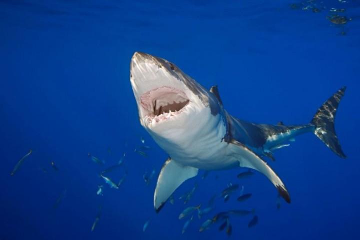 Новозеландский врач отбился от акулы, зашил себе раны и пошел в пивную