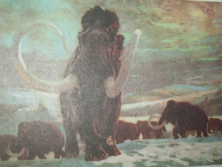 В Якутии начато производство консервов из мамонта