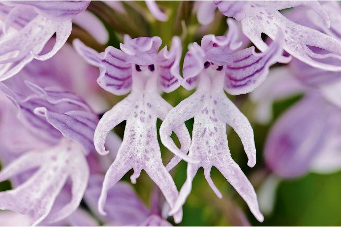 Эквадор официально назван страной орхидей