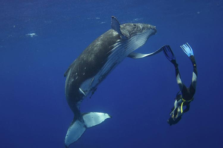 Дайвер чудом уцелел при встрече с китом