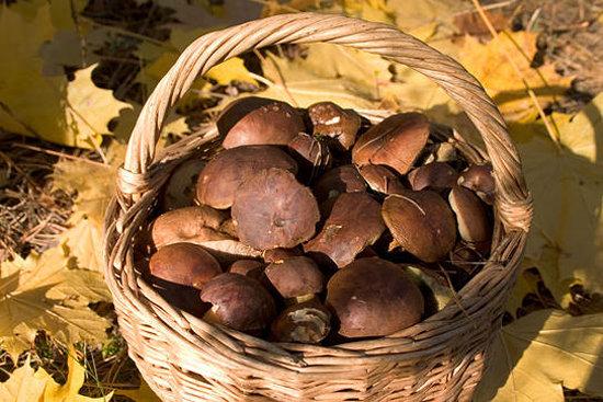 Праздник грибов в Бутане