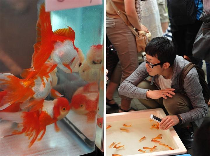 Фестиваль золотых рыбок в Японии